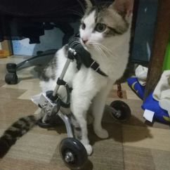 Wheelchair For Cats La Z Boy Martin Big Tall Executive Office Chair Brown Cat 瘫痪 Scooter Disabled Assisted Hind Limb Exercise Car Broken Leg Dog
