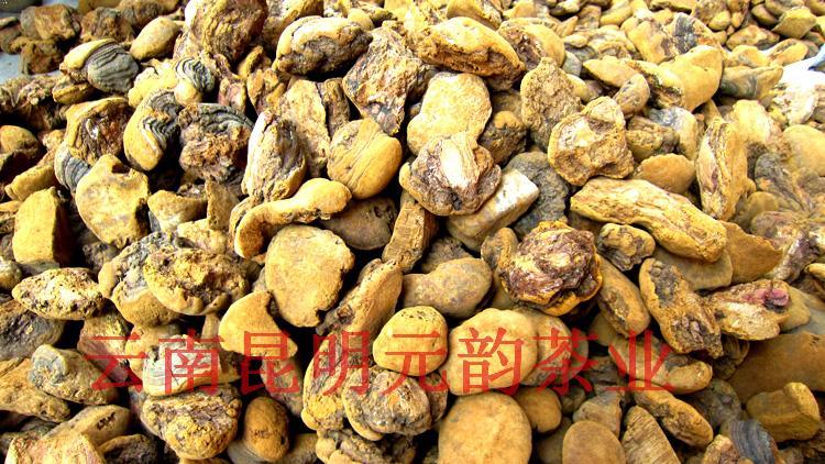 雲南野生桑樹桑黃 桑黃片桑黃粉 養生新趨勢森林黃金特賣100元/斤