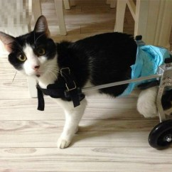 Wheelchair For Cats Staples Office Chair Parts Usd 73 32 Dog Pet Paralyzed Lightbox Moreview