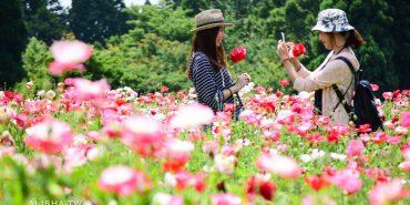 日本。大分|久住花公園 超療癒薰衣草.罌粟花海・現打花草冰淇淋