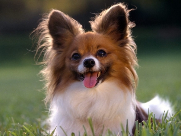 Image Result For Dogs With Allergies