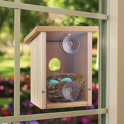 Hd Wallpaper Little Girls Wedding Build A Birdhouse View 7 Fun Ideas For This Spring