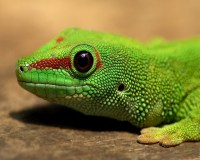 3. Lizard/ Turtle - 7 Pets to Have in College That Are ...