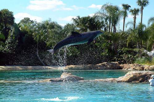 Oasis Hd Wallpaper 10 Cool Attractions In Florida Lifestyle