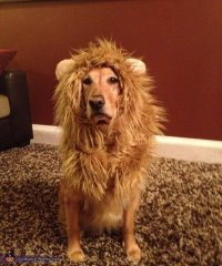 Cowardly Lion - 41 of the Most Hilarious Dog Costumes You ...