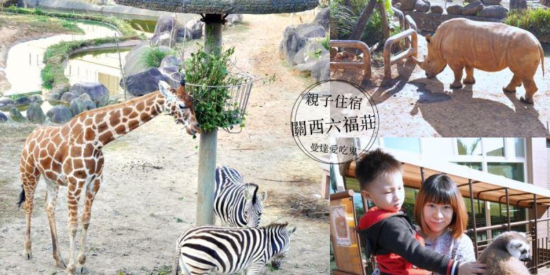 親愛的我睡在動物園裡。近距離欣賞長頸鹿斑馬河馬的難忘回憶。新竹關西六福莊|六福村|親子住宿|新竹飯店