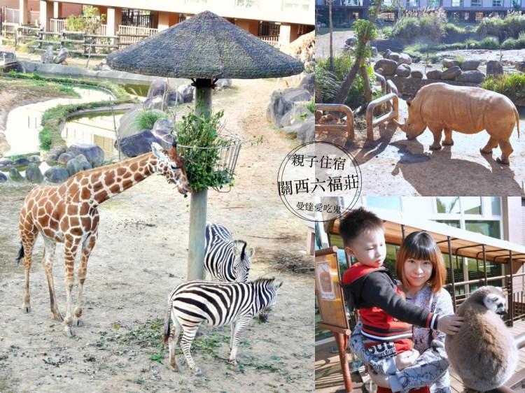 新竹住宿『關西六福莊』來去動物園睡一晚,近距離欣賞長頸鹿、犀牛、狐猴之美!新竹飯店|親子飯店