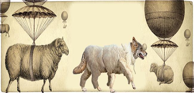 ΕΙΚΟΝΑ---Πρόβατα,-Ελλάδα Το έτος του προβάτου