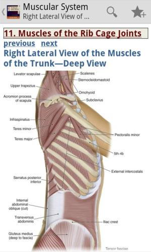 Android Muscular System Manual Screen 6