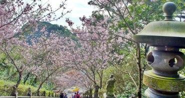 [台北內湖] 碧山巖春日櫻花綻放  粉紅隧道約你浪漫這一季