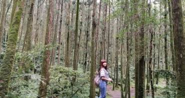 [桃園景點]東眼山國家森林遊樂區 來一場與山林的自我對話