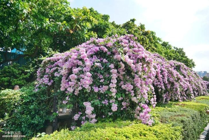 20191018164132 73 - [泰山秘境 蒜香藤花海 ]百尺紫色瀑布超夢幻  花期僅有一周 想拍趁現在