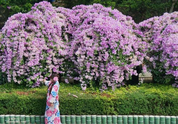 20191018164147 13 - [泰山秘境 蒜香藤花海 ]百尺紫色瀑布超夢幻  花期僅有一周 想拍趁現在