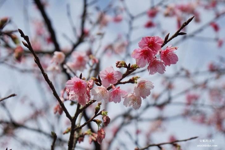 20200125230125 36 - [台北賞櫻景點]淡水天元宮 粉紅三色櫻渲染山城 雄偉天元宮與櫻花的溫柔對話