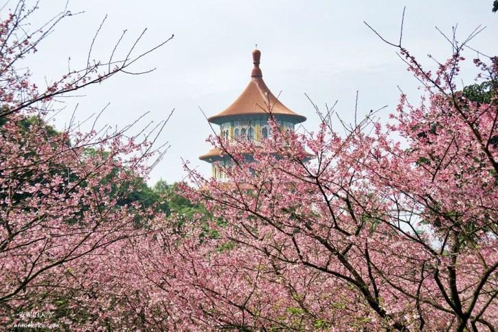 20200125230220 39 - [台北賞櫻景點]淡水天元宮 粉紅三色櫻渲染山城 雄偉天元宮與櫻花的溫柔對話