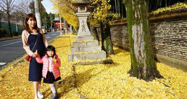 【京阪自由行】京都無料銀杏景點推薦 ♥ 今宮神社前 銀杏大道
