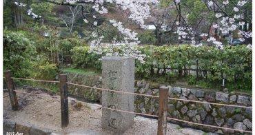 【京阪自由行】賞櫻景點推薦 哲學之道 ♥ 激推的賞櫻名所 陰雨中的櫻花之美
