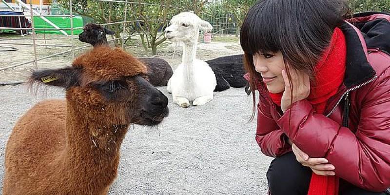 【埔心】茂宏農場;親切的老闆,感靜整潔的羊駝農場