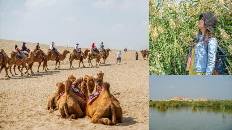 寧夏旅遊沙湖   絲綢之路塞上風光,沙漠、湖景、蘆葦、飛鳥,寧夏沙湖生態旅遊景區。