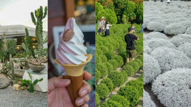 田尾景點美食 | 彰化田尾公路花園怎麼玩?放假就是要玩田尾!波波草、芙蓉草,IG打卡衝一波。