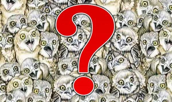 optical illusions find cat # 6