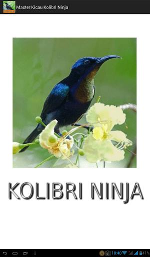 Download Video Kolibri Ninja : download, video, kolibri, ninja, Master, Kicau, Kolibri, Ninja, Download