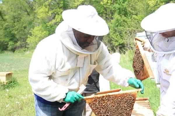 A man checks on his bees