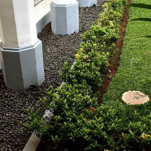 patio pebble loose pt golden stone
