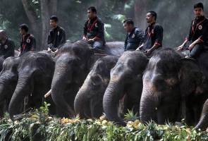 Ministry to apply RM19 million allocation to contain damage caused by elephants   Astro Awani