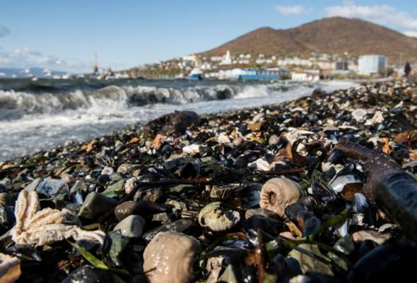Penduduk cemas hidupan marin di pantai timur Rusia mati, peluncur ombak sakit