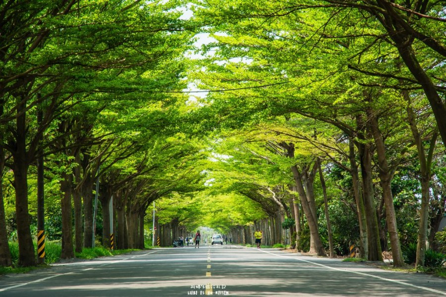 |台南‧學甲|炎炎夏日,來174縣道避暑去*全台最美的小葉欖仁綠色隧道