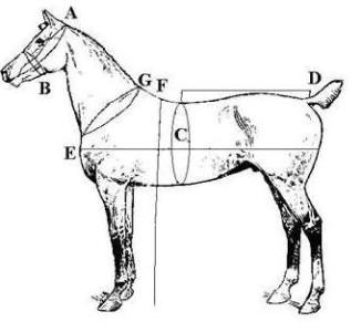 BLaCk EcoNoMY DRIVING CART MINI Small PONY HARNESS Horse