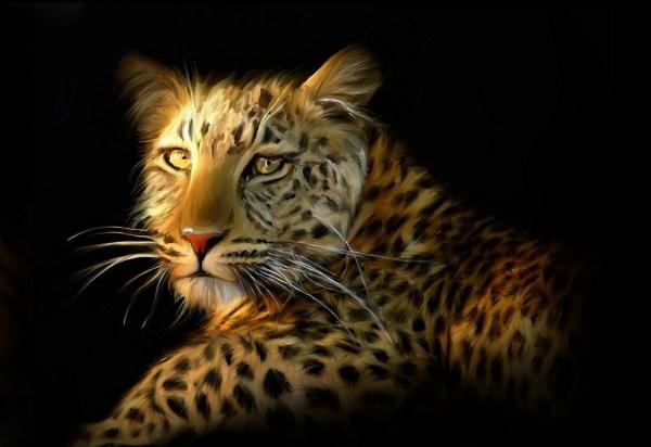 Leopard Tiger Lion Size