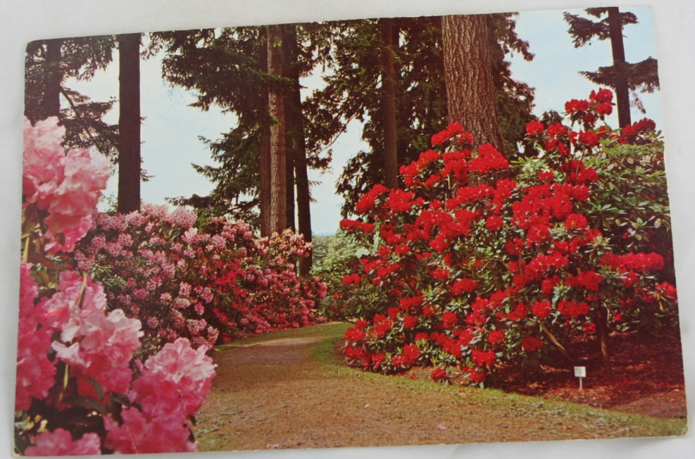 vintage postcard, Portland, Oregon, Washington Park