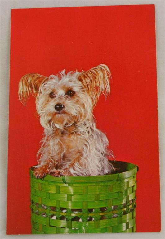 vintage postcard, animals, dog, Skye Terrier