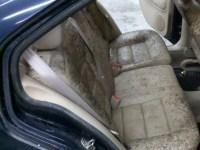 Kill Mold In Car Carpet - Carpet Ideas