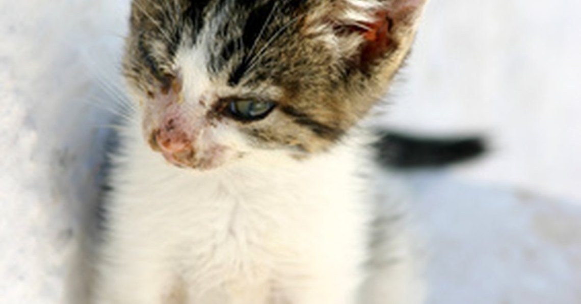 Diet for Cat With Diarrhea   eHow UK