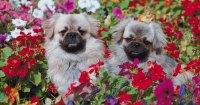 How to keep dogs out of flower beds and gardens