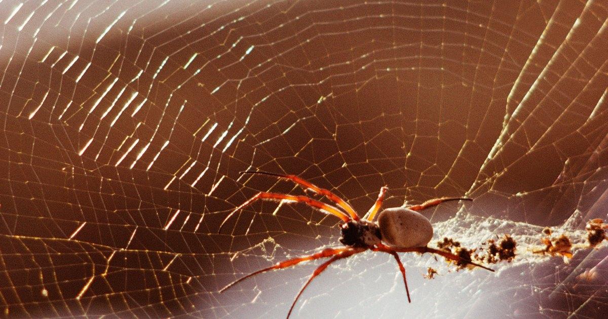 Aranhas No Banheiro  Ehow Brasil