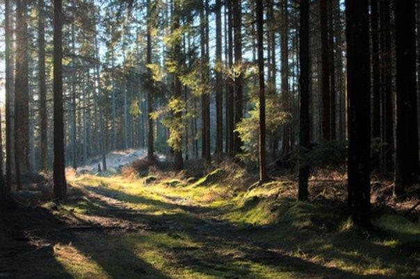 Cómo hacer un terrario de bosque