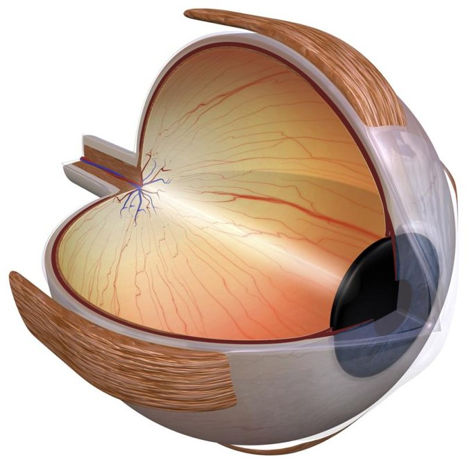 parts of the eyelid diagram force vector calculations information for kids on human eye | livestrong.com