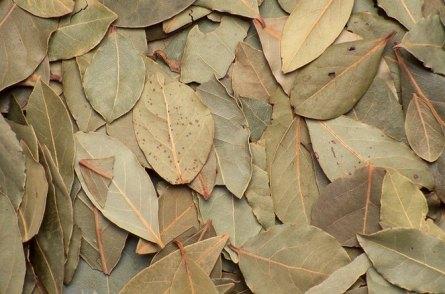 Image result for bay leaves