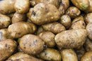Nutrition For A Russet Vs Yukon Gold Potato