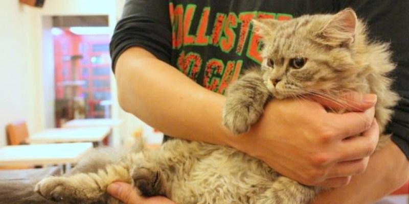 【兔兔專欄】[台中]貓爸貓咪主題餐廳--超多貓咪,貓奴們不能錯過,每隻貓都好溫馴喔!@西區 精美街