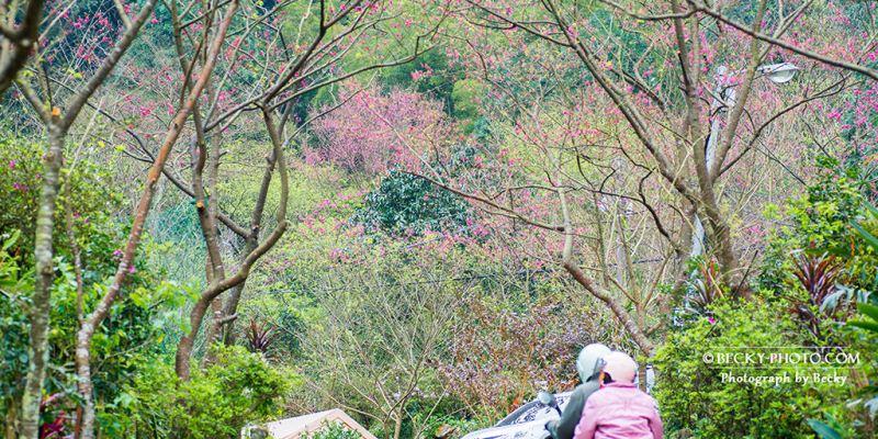 【新北】。三峽賞櫻「建安131櫻花園」城市外的桃花源*建安路131交通路線