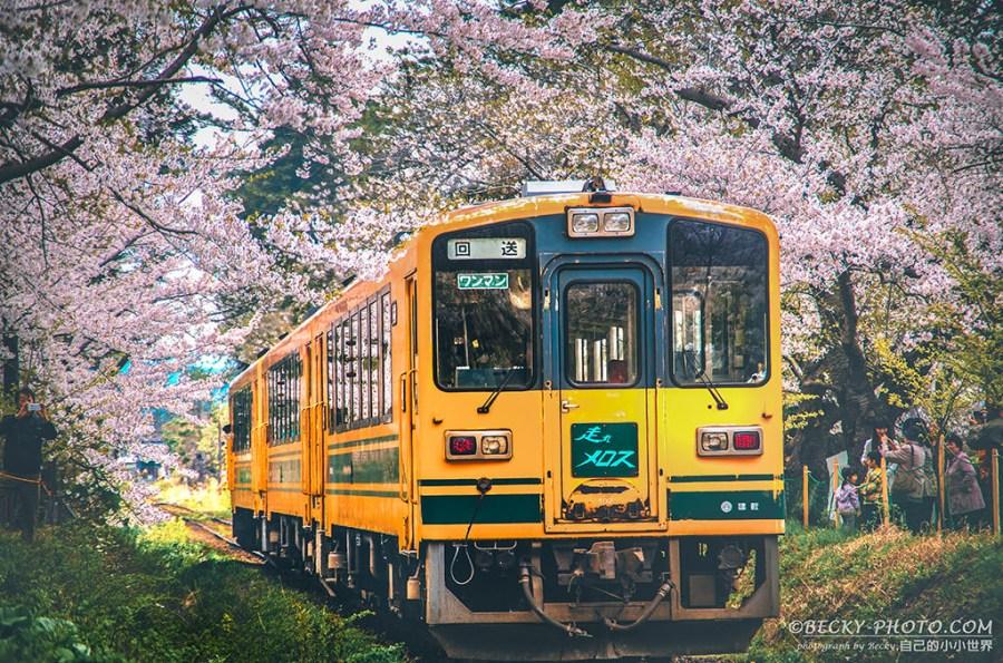 【青森】。蘆野公園櫻花火車 五能線津輕鐵道!東北櫻花景點
