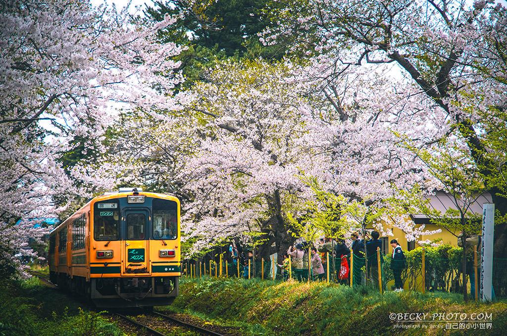 【青森】。蘆野公園櫻花火車 五能線津輕鐵道!東北櫻花景點 - [自己的小小世界] 旅遊.攝影