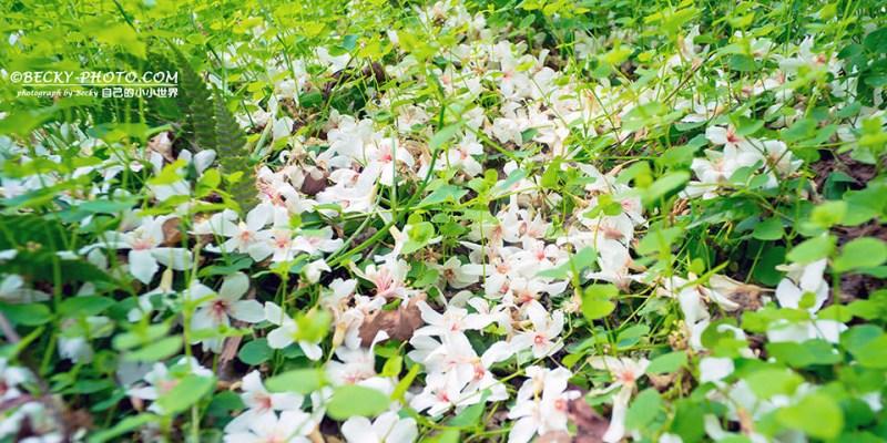 【新北】。土城桐花季3步道:天上山、桐花步道、十八羅漢岩