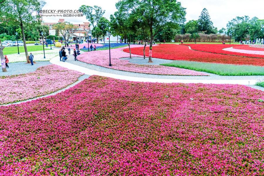 【桃園】。八德花海紅色粉色花薰衣草近陸軍學校 @花舞霄裡!人少桃園拍照點