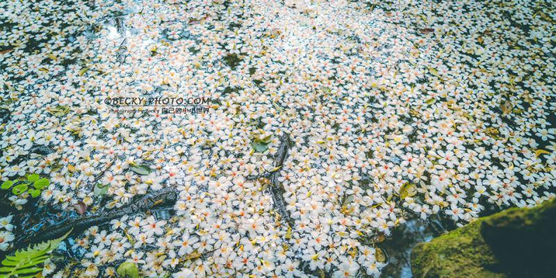 【桃園】。桐花水池超浪漫、四月雪落下免費拍照 ! 近兒童遊樂設施